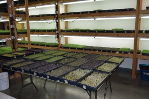 Micro Greens Shelves 2