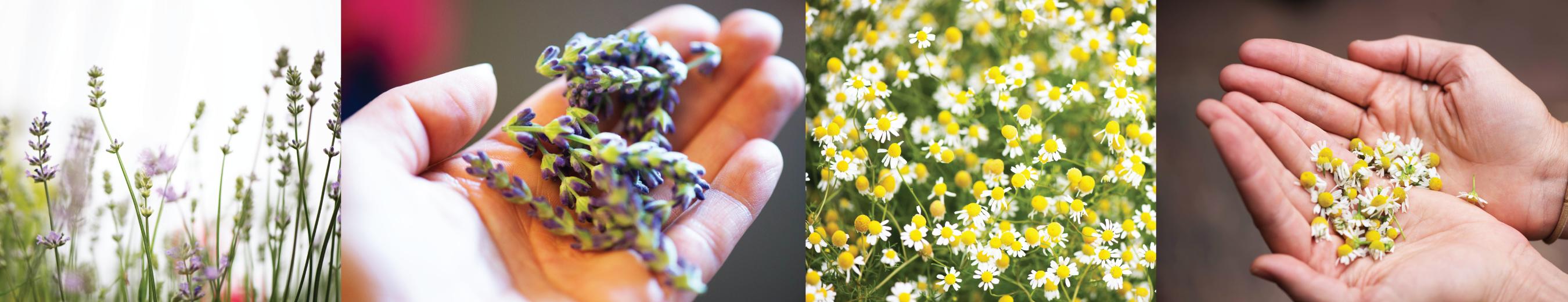 lavendar-chamomile