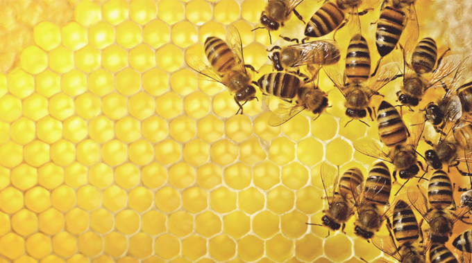 TJS Edit: Bees Finally Land Endangered Act Protection