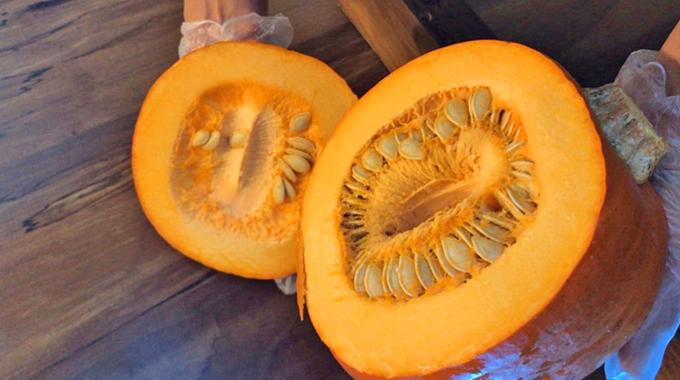 Ingredient Spotlight: Pumpkin Is Not The New Black